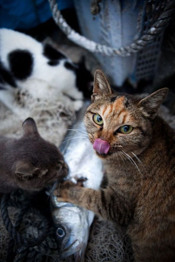 japan_island_cats_640_high_18_21009800
