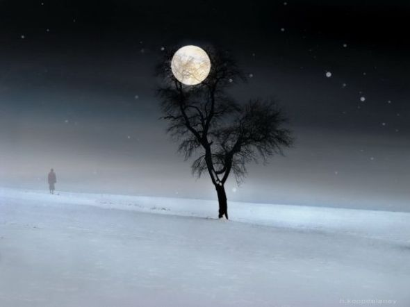 first-day-winter-full-moon-snow-tree-walk