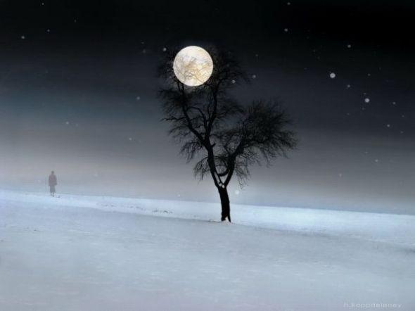 first-day-winter-full-moon-snow-tree-walk