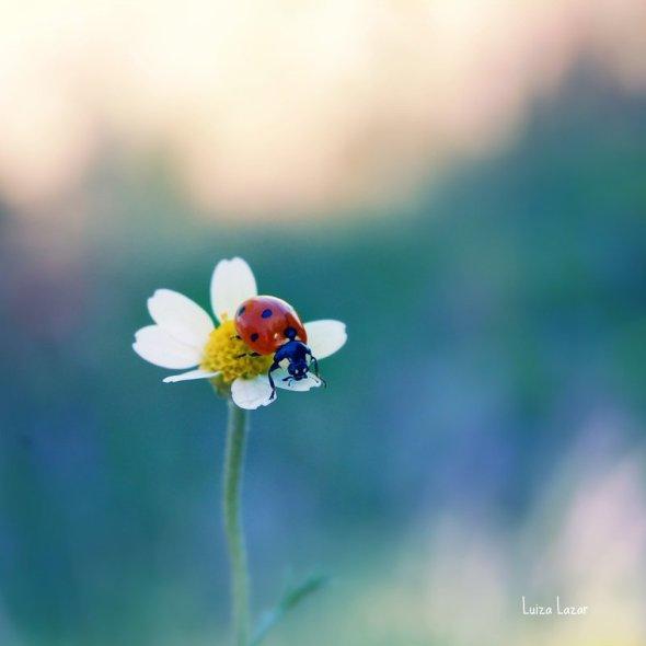 a_lady_and_a_daisy_by_luizalazar-d53gk5e
