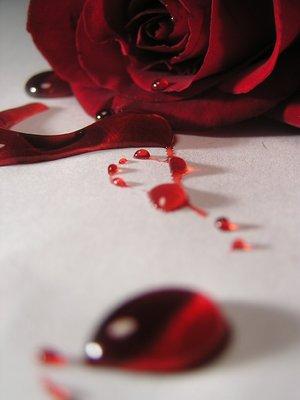 bleeding_red_rose