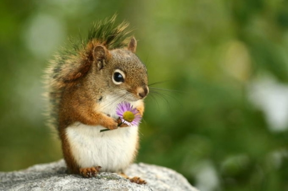 squirrel-holding-a-flower