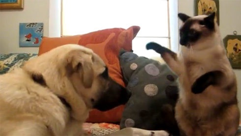 cat-dog-boxing