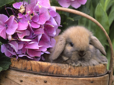 lapin-fleurs2