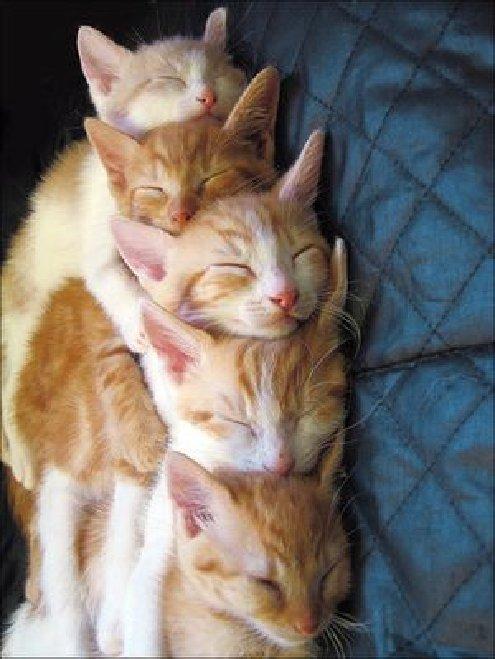 0412 5 Kitties Sleeping Together