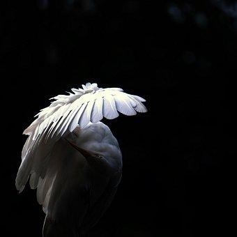 254156-stock-photo-white-animal-black-bird-elegant-wing
