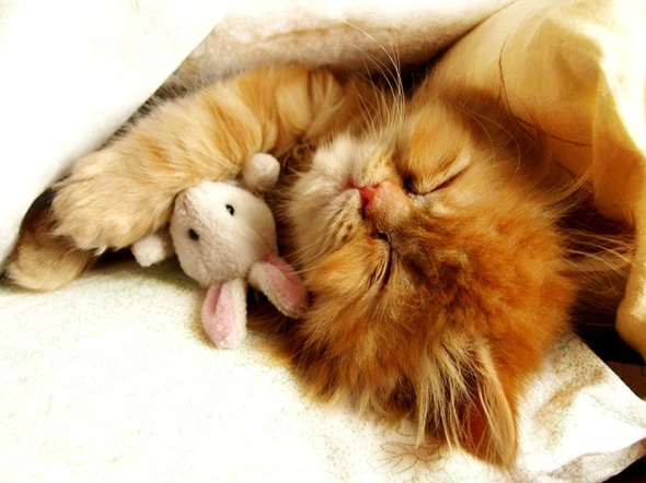 cat_cute_hugging_sleeping_toy-1280x9601