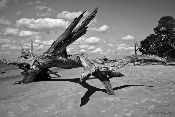 Driftwood-beach1