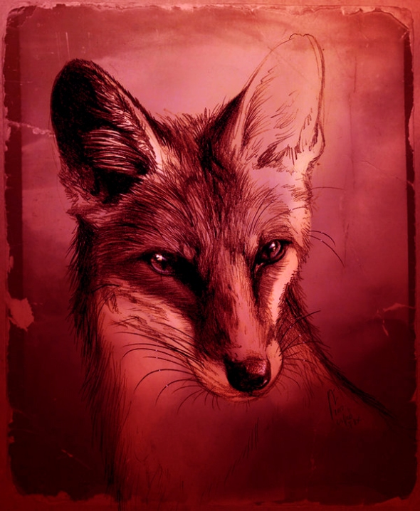 fuchs_by_culpeo_fox-d5ffm9g