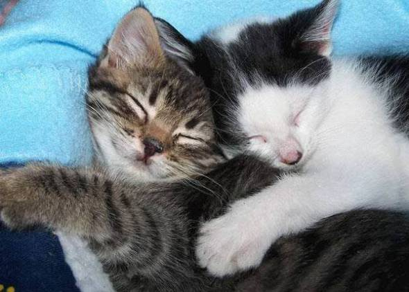 sleeping_hugging_cats
