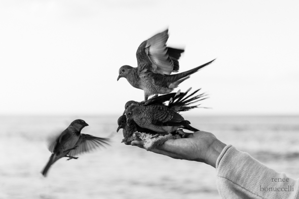 B-is-for-black-and-white-bird-1