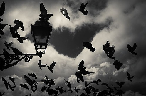 bird-birds-black-and-white-clouds-flying-Favim.com-254276