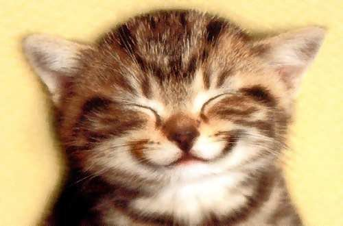 Kitty-smile-picture
