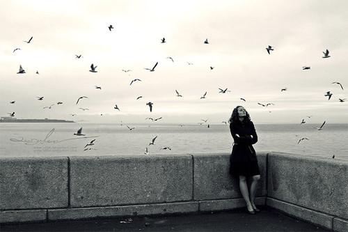 alone,black,and,white,favorites,birds,bw,ideas-c34af6ac788b215a4ee4802f9d6dd4af_h