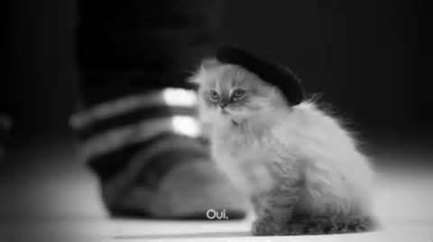 cat-gifs-tumblr-funny_4584281645515417