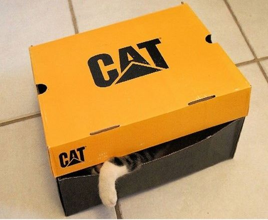funny-cat-inside-box