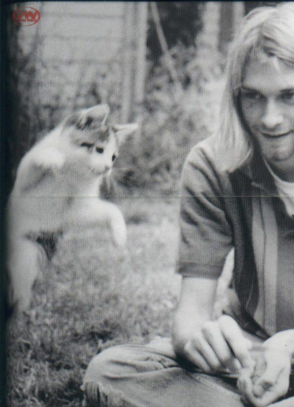 kurt_cobain___cat