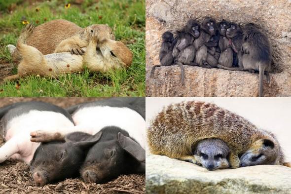 cute-animals-hug
