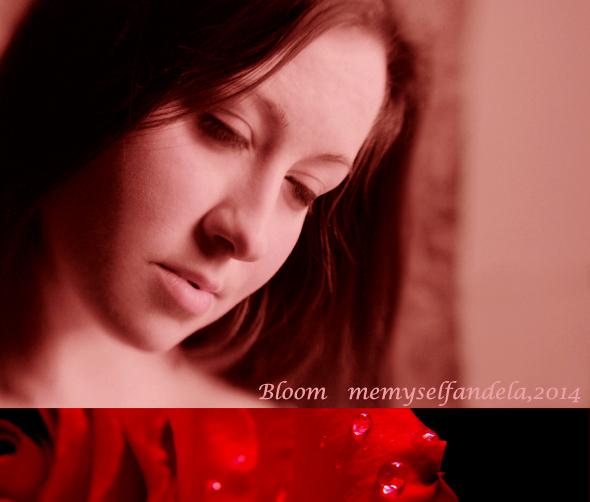 bloom-combo artwork