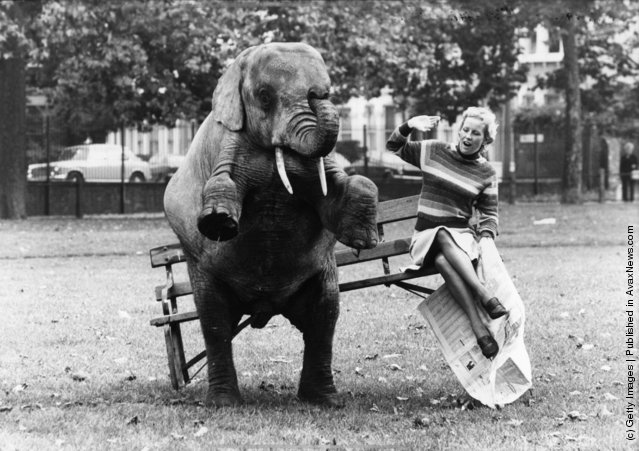 Old & Funny Photos of Elephants (2)