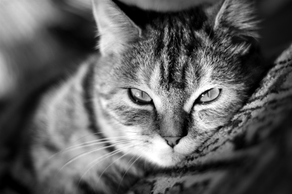 cat-black-white-widescreen_764750