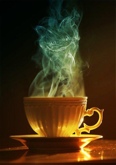 cat-photography-tea-teacup-Favim.com-160942