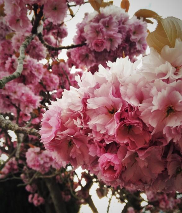 adela galasiu blossoms 6